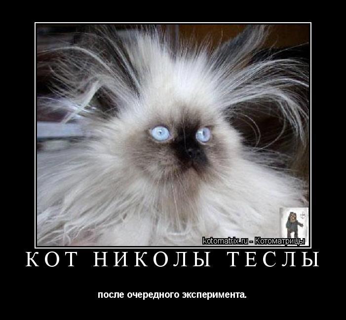 Котоматрица: Кот Николы Теслы после очередного эксперимента.