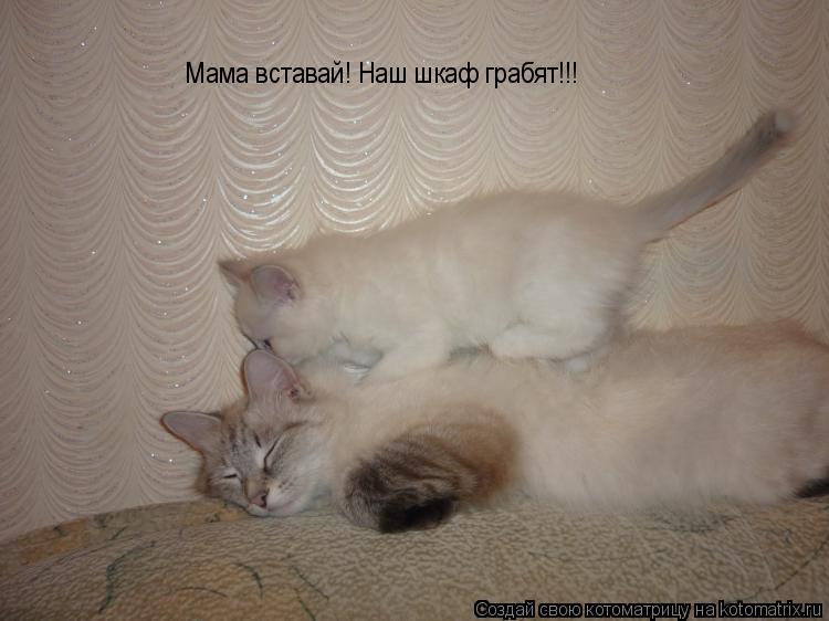 Котоматрица: Мама вставай! Наш шкаф грабят!!!