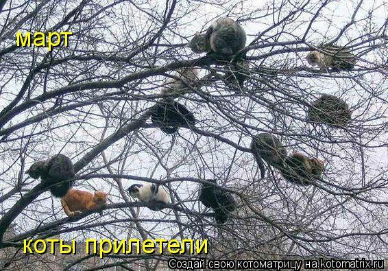Котоматрица: март  коты прилетели