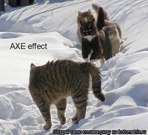 Котоматрица: AXE effect