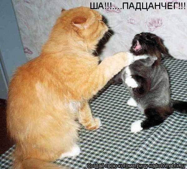 Котоматрица: ША!!!....ПАДЦАНЧЕГ!!!