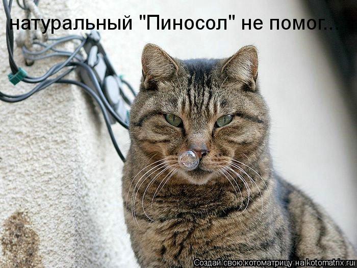"Котоматрица: натуральный ""Пиносол"" не помог..."