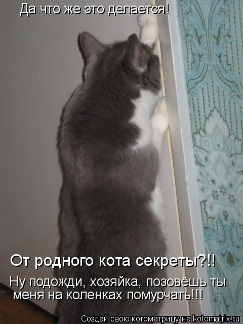 Котоматрица: Да что же это делается! Ну подожди, хозяйка, позовёшь ты  меня на коленках помурчать!!! От родного кота секреты?!!
