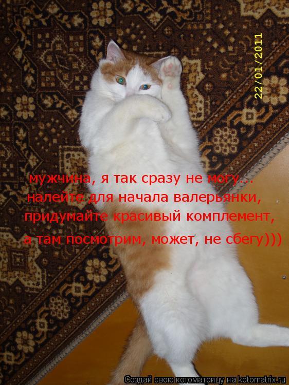 Котоматрица: мужчина, я так сразу не могу... налейте для начала валерьянки, а там посмотрим, может, не сбегу))) придумайте красивый комплемент,