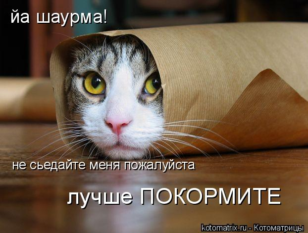 Котоматрица: йа шаурма!   не сьедайте меня пожалуйста  лучше ПОКОРМИТЕ