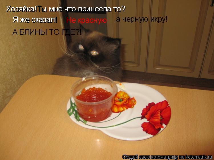Котоматрица: Хозяйка!Ты мне что принесла то? Я же сказал! Не красную ,а черную икру! А БЛИНЫ ТО ГДЕ?!