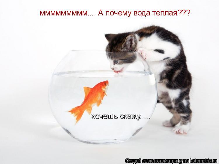Котоматрица: ммммммммм.... А почему вода теплая??? хочешь скажу.....