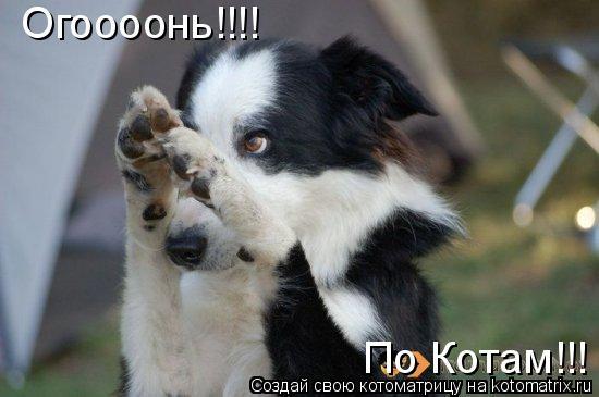 Котоматрица: Огоооонь!!!! По Котам!!!