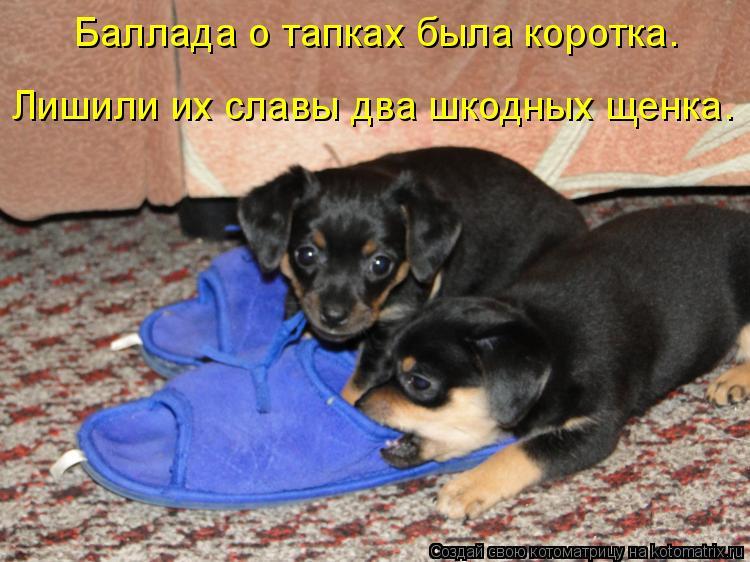 Котоматрица: Баллада о тапках была коротка.  Лишили их славы два шкодных щенка.