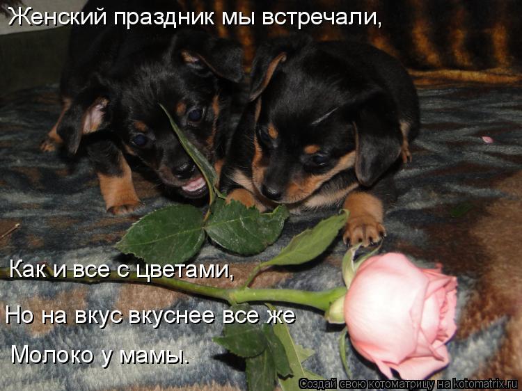 Котоматрица: Женский праздник мы встречали, Как и все с цветами, Но на вкус вкуснее все же Молоко у мамы.