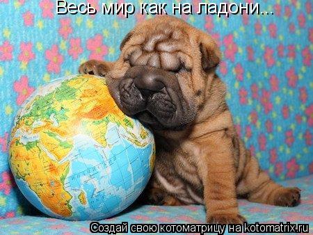 Котоматрица: Весь мир как на ладони...