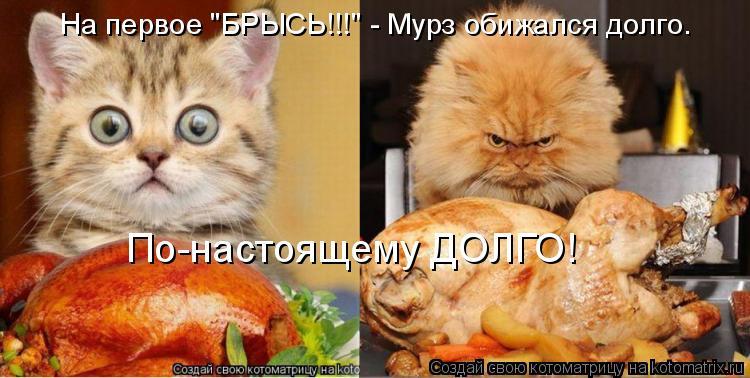 """Котоматрица: На первое """"БРЫСЬ!!!"""" - Мурз обижался долго. По-настоящему ДОЛГО!"""