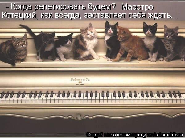 Котоматрица: - Когда репетировать будем? Маэстро  Котецкий, как всегда, заставляет себя ждать...