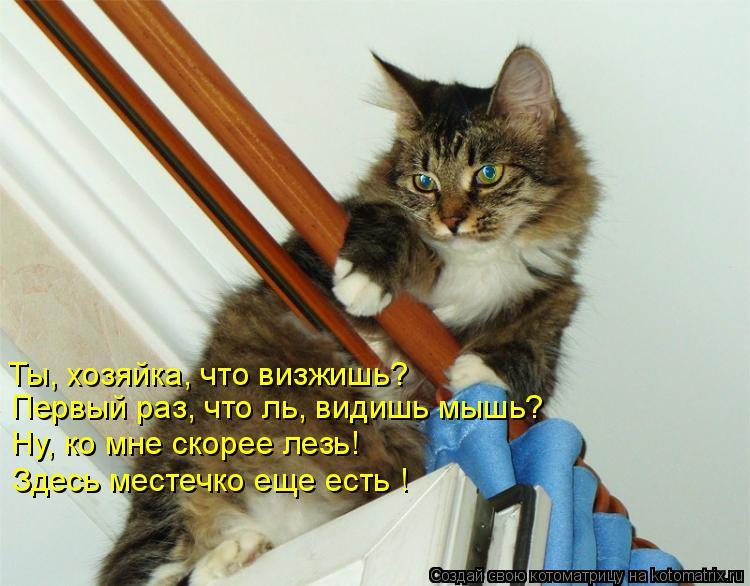 Котоматрица: Ты, хозяйка, что визжишь? Первый раз, что ль, видишь мышь? Здесь местечко еще есть ! Ну, ко мне скорее лезь!