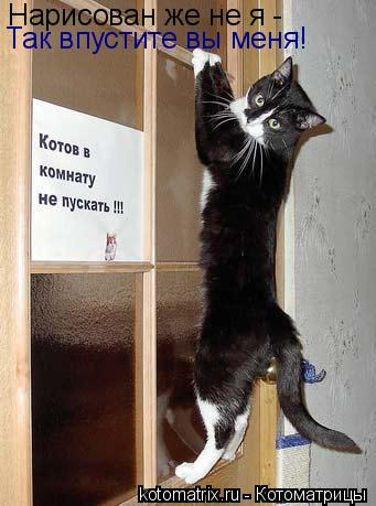 Котоматрица: Нарисован же не я - Так впустите вы меня!