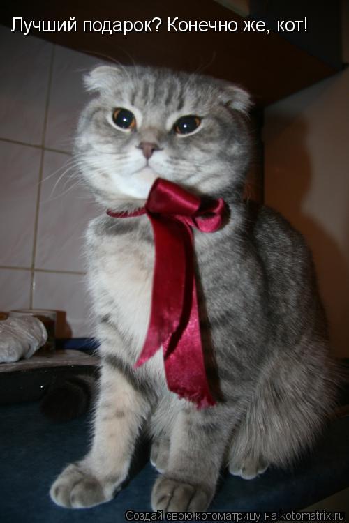 Котоматрица: Лучший подарок? конечно же, кот! Лучший подарок? Конечно же, кот!
