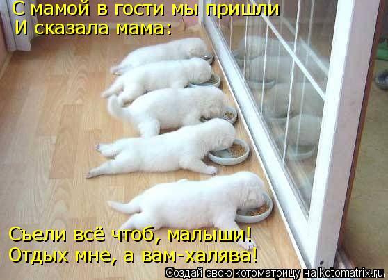 Котоматрица: С мамой в гости мы пришли И сказала мама: Съели всё чтоб, малыши! Отдых мне, а вам-халява!