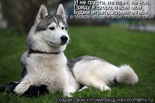 Котоматрица: И не грусти, не плач, не ной, Приду я скоро, пёсик мой. Будем играть, кормить тебя, Ну а теперь - пока, и знай: люблю тебя!