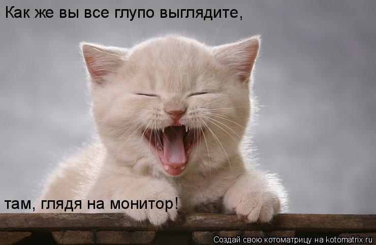 Котоматрица: Как же вы все глупо выглядите, там, глядя на монитор!