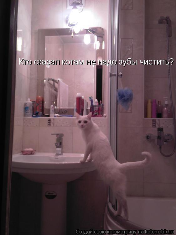 Котоматрица: Кто сказал котам не надо зубы чистить?