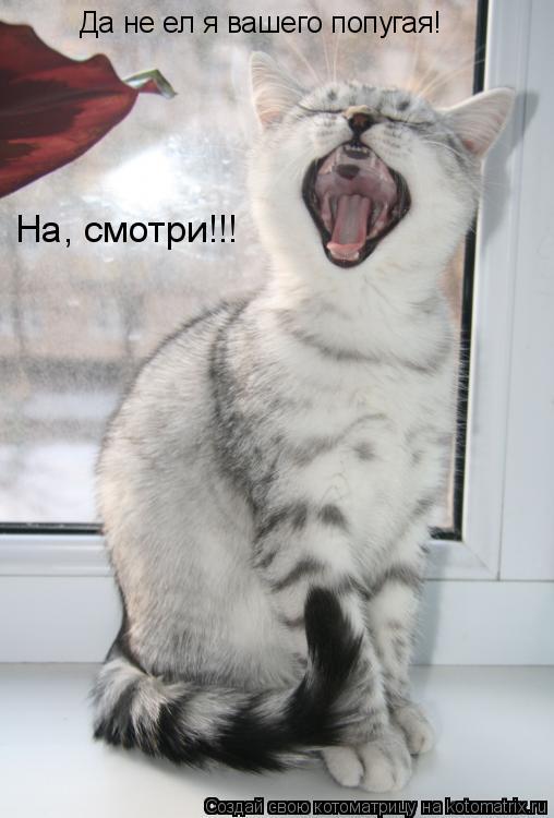 Котоматрица: Да не ел я вашего попугая! На, смотри!!!
