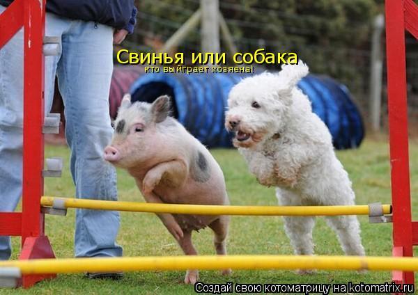 Котоматрица: Свинья или собака кто выйграет хозяена!