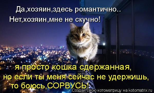 Котоматрица: Да,хозяин,здесь романтично.. Нет,хозяин,мне не скучно! я просто кошка сдержанная, но если ты меня сейчас не удержишь, то боюсь,СОРВУСЬ!