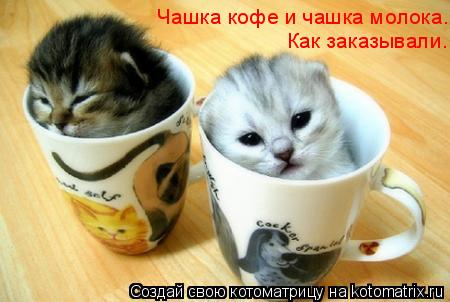 Котоматрица: Чашка кофе и чашка молока.  Как заказывали.