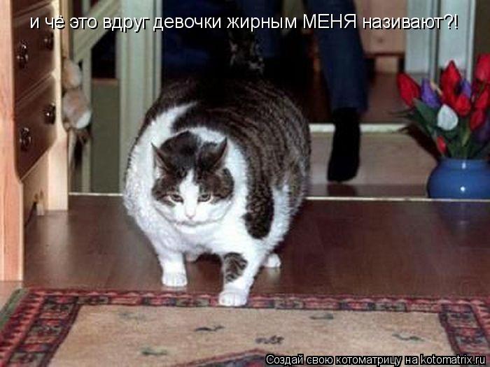 Котоматрица: и чё это вдруг девочки жирным МЕНЯ називают?!