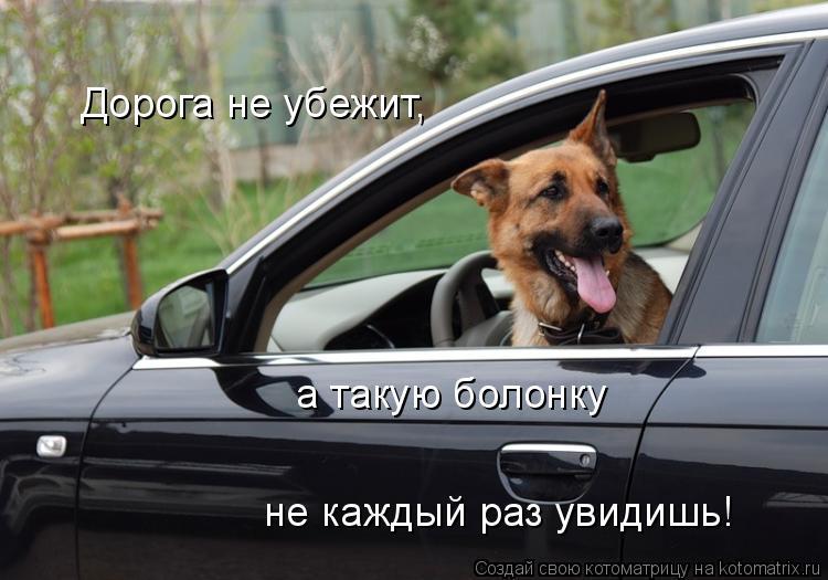 Котоматрица: Дорога не убежит, а такую болонку не каждый раз увидишь!