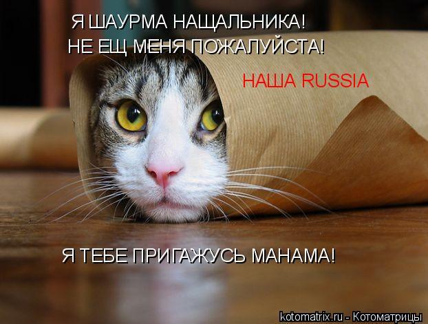 Котоматрица: Я ШАУРМА НАЩАЛЬНИКА! НЕ ЕЩ МЕНЯ ПОЖАЛУЙСТА! Я ТЕБЕ ПРИГАЖУСЬ МАНАМА! НАША RUSSIA