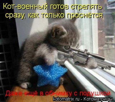 Котоматрица: Кот-военный готов стрелять сразу, как только проснётся Даже ещё в обнимку с подушкой