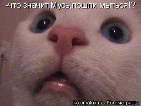 Котоматрица: -что значит,Мусь,пошли мыться!?
