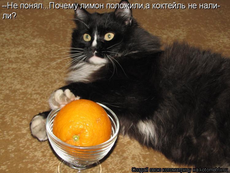 Котоматрица: --Не понял...Почему лимон положили,а коктейль не нали- ли?