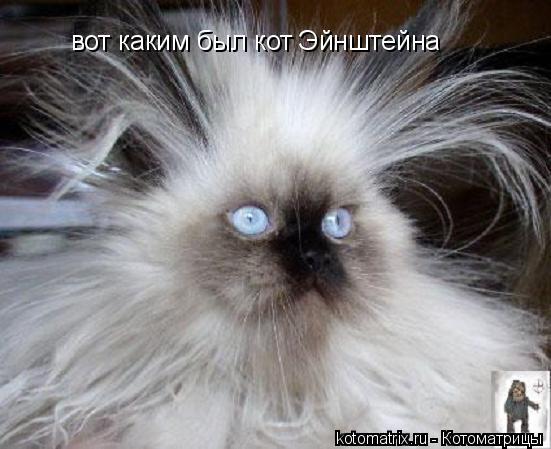 Котоматрица: вот каким был кот Эйнштейна
