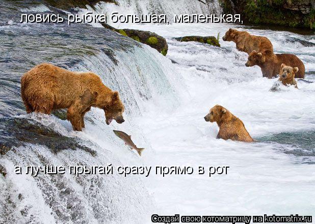 Котоматрица: ловись рыбка большая, маленькая, а лучше прыгай сразу прямо в рот