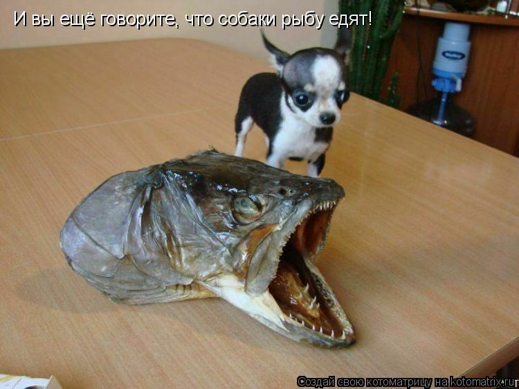 Котоматрица: И вы ещё говорите, что собаки рыбу едят!