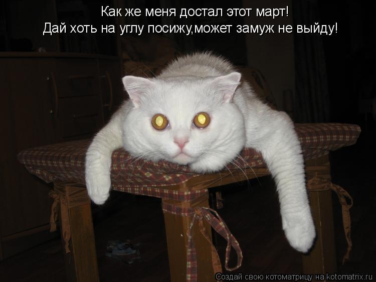 Котоматрица: Как же меня достал этот март! Дай хоть на углу посижу,может замуж не выйду!