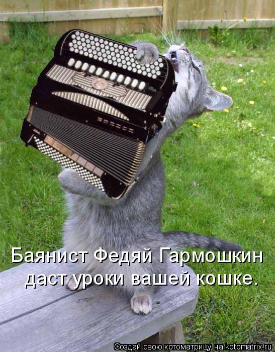 Котоматрица: Баянист Федяй Гармошкин даст уроки вашей кошке.