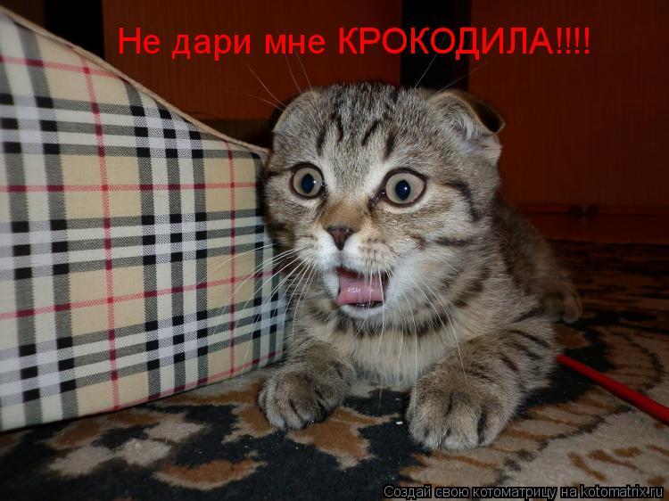 Котоматрица: Не дари мне КРОКОДИЛА!!!!