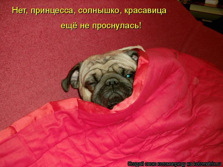 Котоматрица: Нет, принцесса, солнышко, красавица ещё не проснулась!