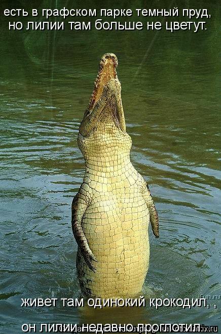 Котоматрица: есть в графском парке темный пруд,  но лилии там больше не цветут.  живет там одинокий крокодил, ,  он лилии недавно проглотил...