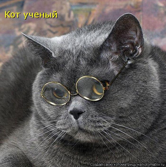 Котоматрица: Кот ученый