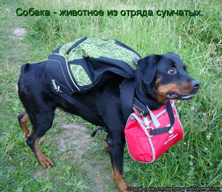 Котоматрица: Собака - животное из отряда сумчатых.