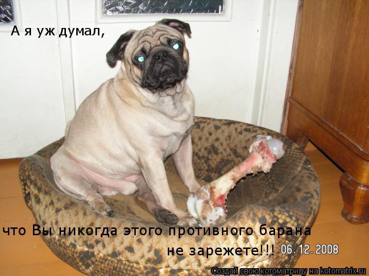 Котоматрица: А я уж думал,  что Вы никогда этого противного барана   не зарежете!!!