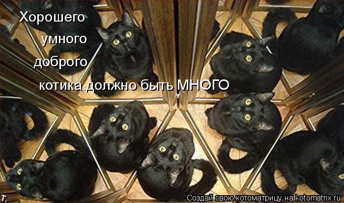Котоматрица: Хорошего умного доброго котика должно быть МНОГО