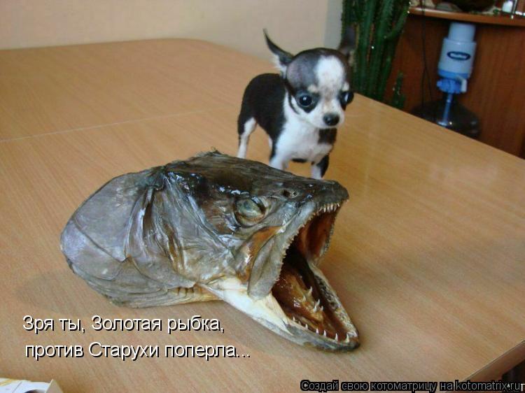 Котоматрица: Зря ты, Золотая рыбка, против Старухи поперла...