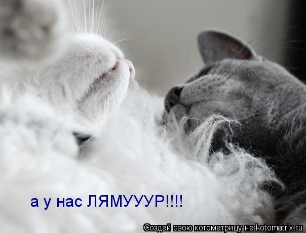 Котоматрица: а у нас ЛЯМУУУР!!!!