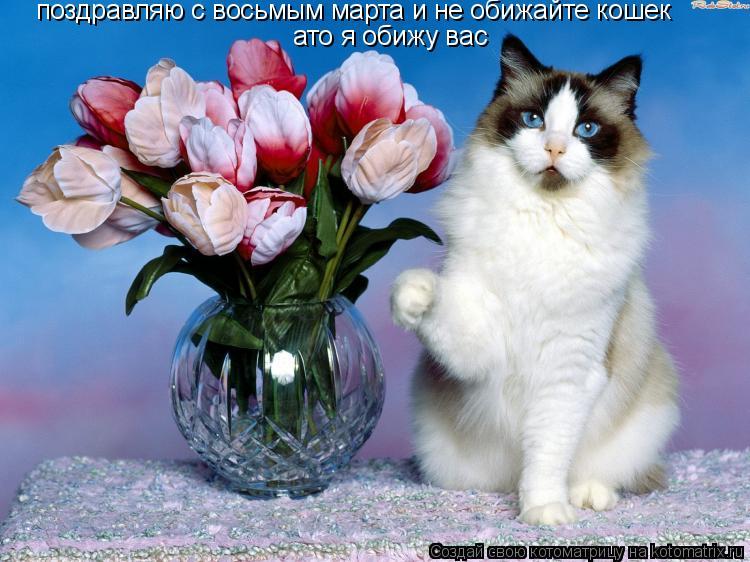 Котоматрица: поздравляю с восьмым марта и не обижайте кошек  ато я обижу вас