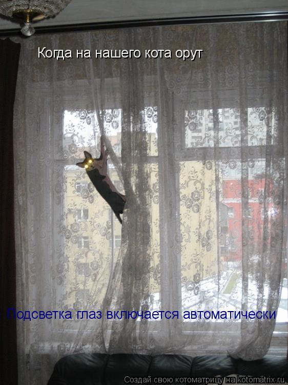 Котоматрица: Когда на нашего кота орут Подсветка глаз включается автоматически